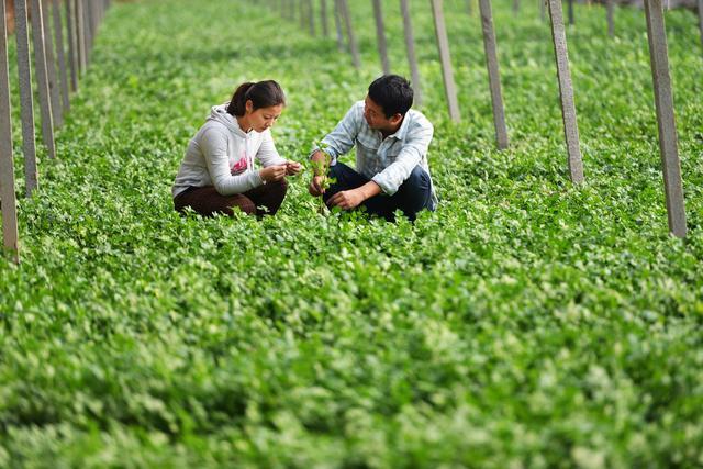 农村小投资创业做什么好?推荐小型投资办厂