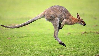 动物为什么有尾巴?尾巴有什么作用?