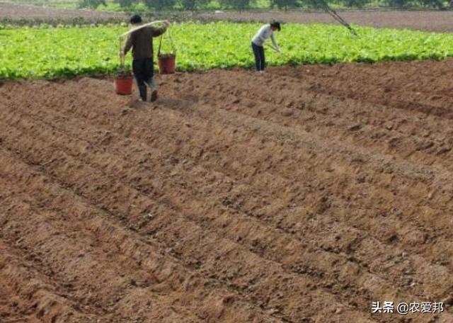 你知道一亩等于多少平方米吗?有关土地方面,农民务必清楚