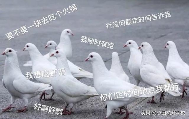 """涨知识了,""""放鸽子""""原来是这么来的"""